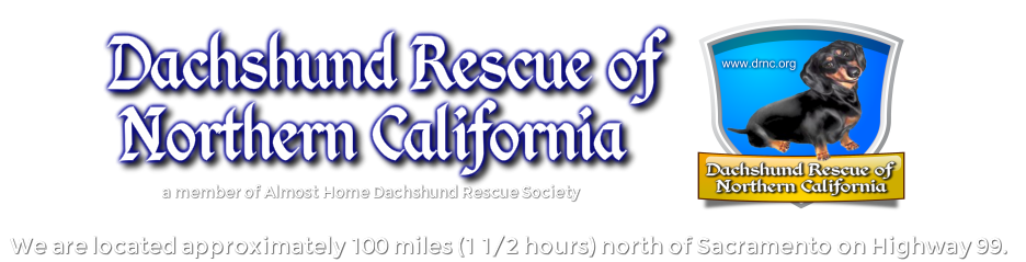 Dachshund Rescue of Northern California
